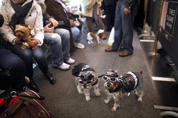 Dzīvnieku maskarāde Ņju-Jorkā!