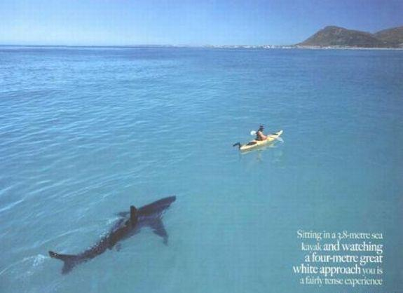 Haizivs + cilvēks