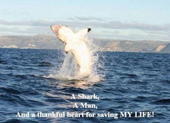 Nau iespejams atbrivoties no... Autors: Saymon87 Haizivs milas stasts.