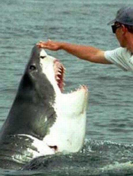 Viena varda-uzvedas lidzigi... Autors: Saymon87 Haizivs milas stasts.