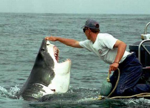 Tads luk milas stasts.. Autors: Saymon87 Haizivs milas stasts.