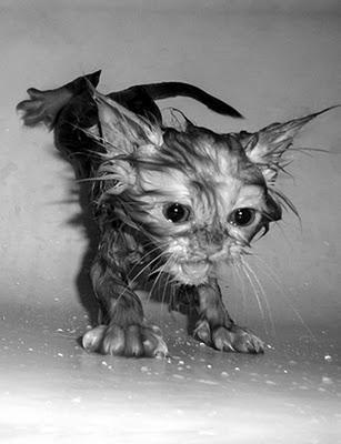Kā nomazgāt kaķi
