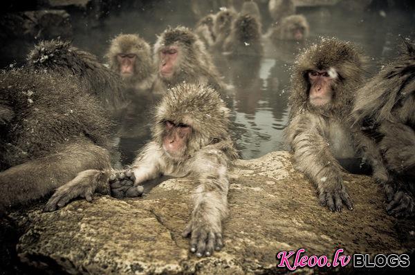 snow_monkeys-02.jpg