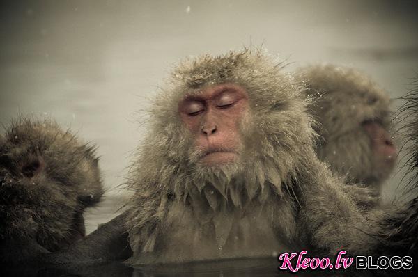 snow_monkeys-05.jpg