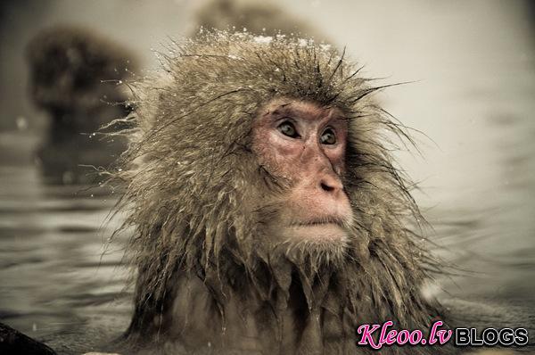 snow_monkeys-08.jpg