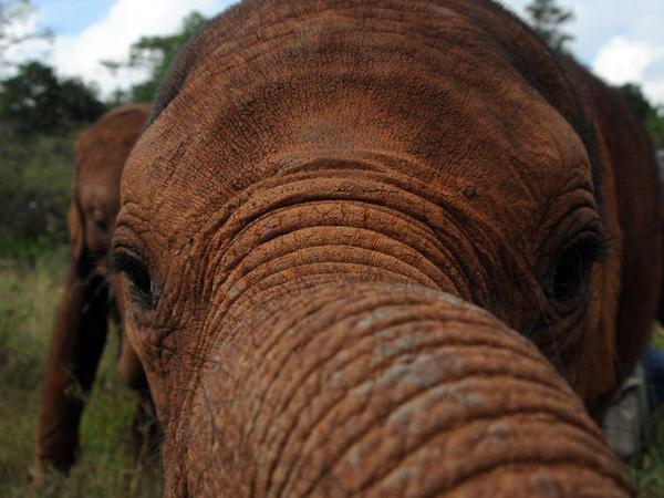 elephant-trunk-close-view_22654_990x742.jpg