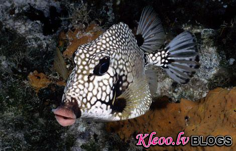 Photo: Trunkfish