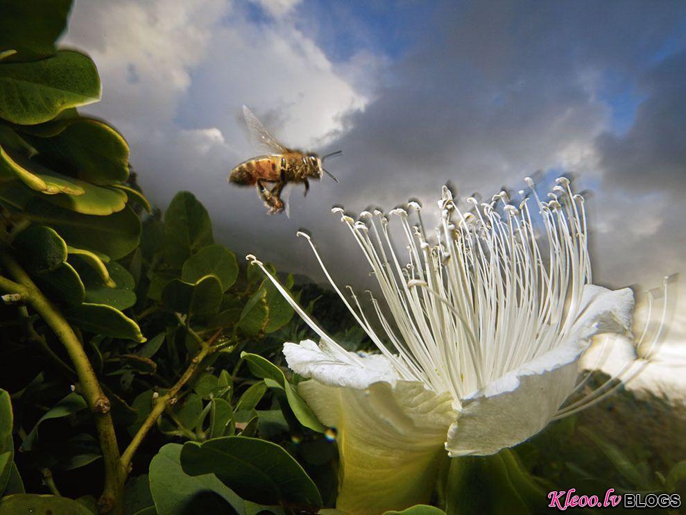 Photo: Honeybee near colorful flower