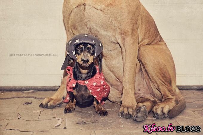 Собаки Серены