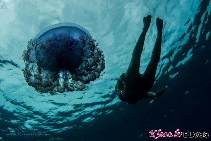 Подводные фотографии Sarah Lee