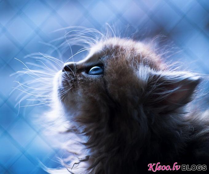Самый симпатичный котенок Дейзи