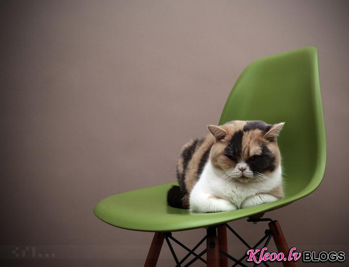 cat__4.jpg