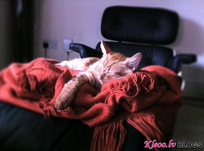 cat__5.jpg