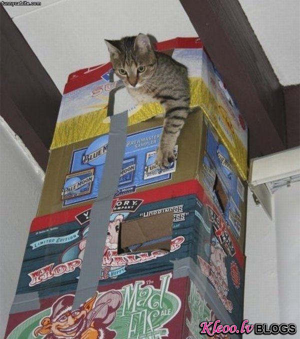 домик для кошки, сделать домик для кошки своими руками, выкройка домика для кота, материалы, эскиз, Ольга Медведева