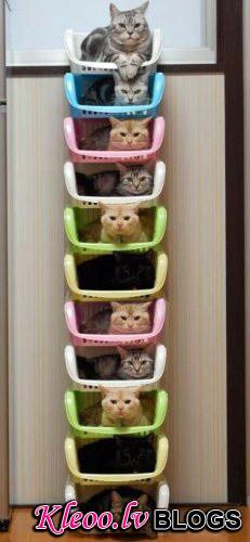 Фото как сделать домик для кота из коробки 104