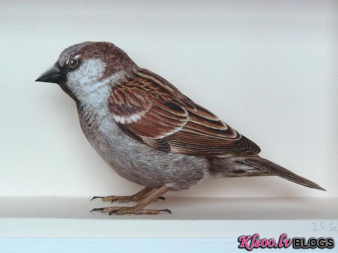 7dbird_.jpg