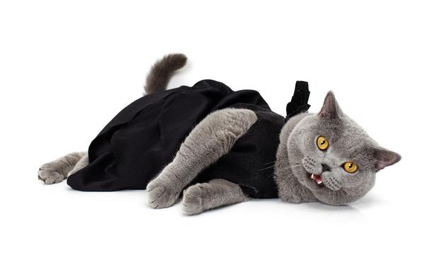 noah-sheldon-cats-wearing-clothes-1_.png