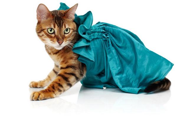 noah-sheldon-cats-wearing-clothes-2_.jpg