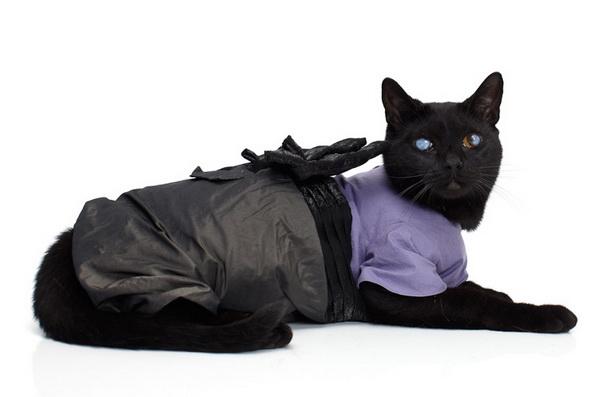noah-sheldon-cats-wearing-clothes-3_.jpg