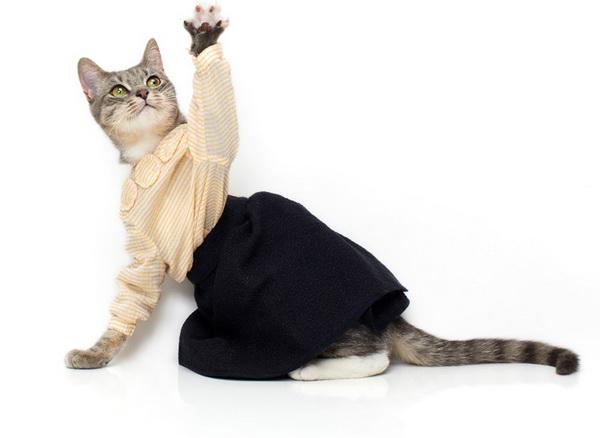 noah-sheldon-cats-wearing-clothes-4_.jpg