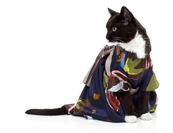 noah-sheldon-cats-wearing-clothes-6_.jpg
