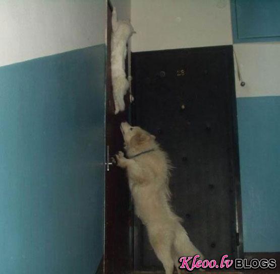Door Climbing