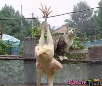 Kaķis vs. Vista