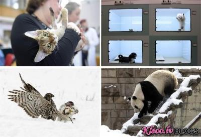 Dzīvnieki pasaulē.