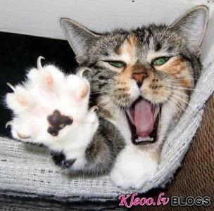 Šis tas no kaķu dzīves.