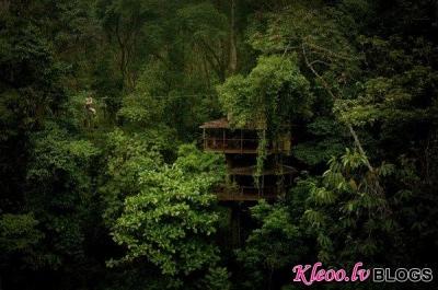 Mājas džungļos.