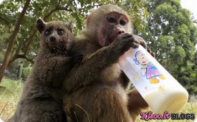 Бабуин и галаго – верные друзья