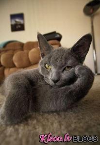 Кошачий язык жестов