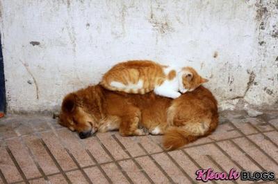 Dzīvnieki miegā.