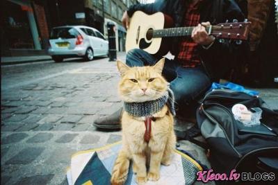Rudais kaķis Bobs.