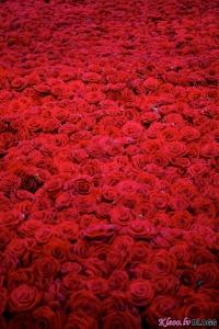 10 000 rozu skaista dzive un nave