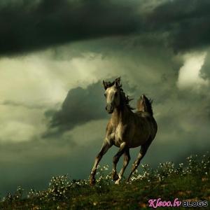 Wojtek Kwiatkowski zirgu fotogrāfijas.