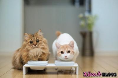 Kaķi.