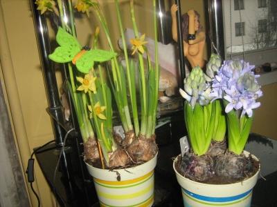 pavasaris mājās
