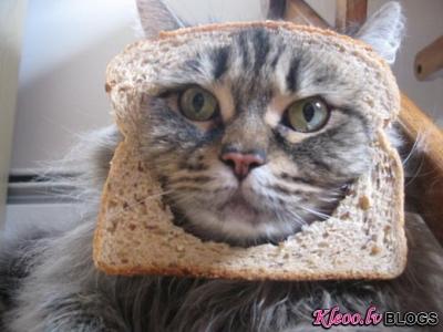 """""""Maizīgākie"""" kaķi."""