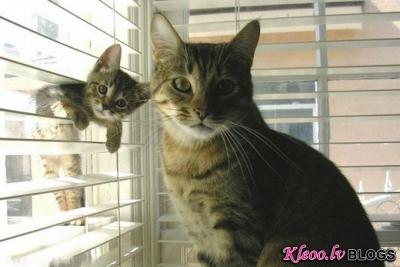 Dzīvnieki un viņu mazuļi.