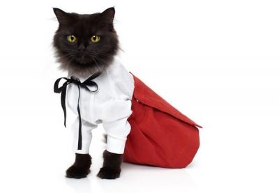 Apģērbtie kaķi Noah Sheldon