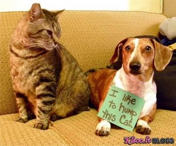 No Dogshaming.