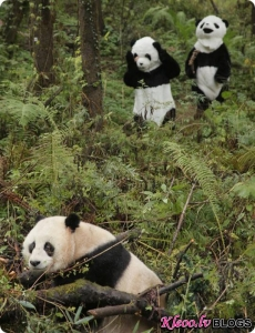 Панда Тао Тао отмечает юбилей