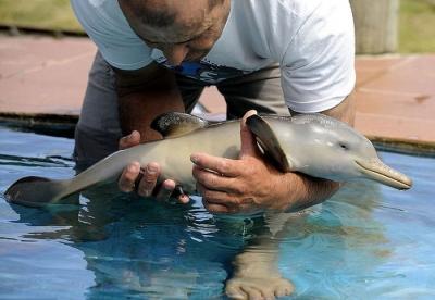 Дельфин 10ти дней от роду