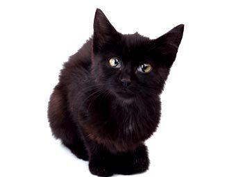 Черным котам отказали в приюте на время Хеллоуина