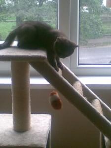 Mans kaķis :)