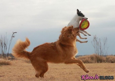 Suņi un lidojošie šķīvīši.