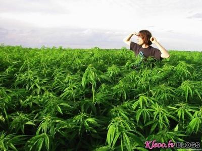 20 фактов о марихуане