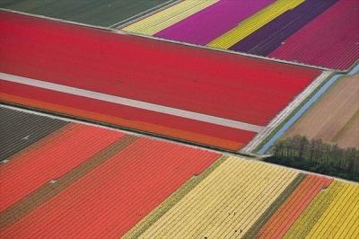 Аэрофотосъемка тюльпанового поля на севере Голландии