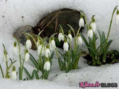 Pavasara noskaņai ;)